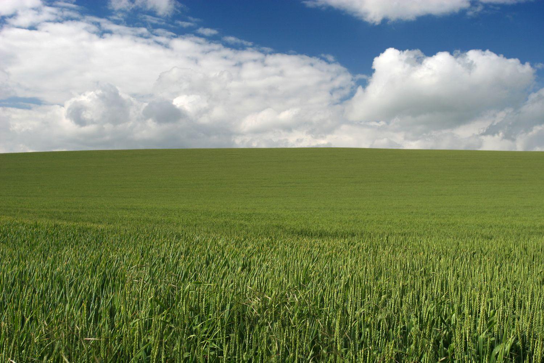 Paysage champ de blé
