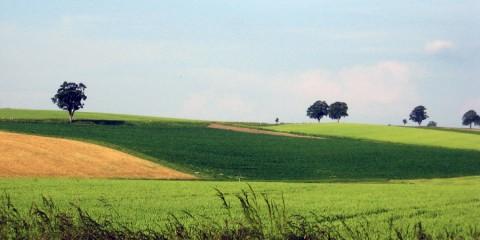 paysage-cultures