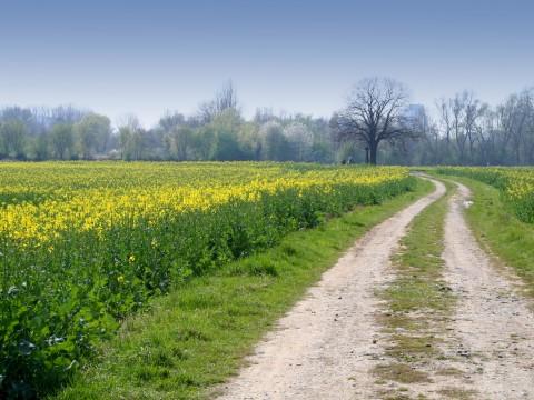 paysage-chemin